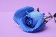 Blue rose on violet background.