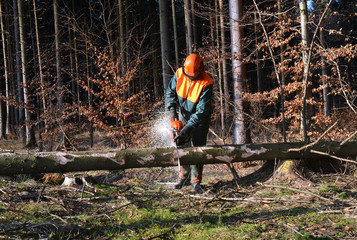 Cutting tree in pieces, woodcutter