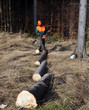 Timber logs in line, lumberjack