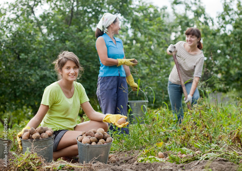 women harvesting potatoes