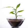 Jung Pflanze in der Glas Schale mit Erde