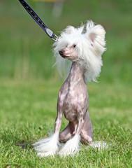 Cute dog sitting on grass