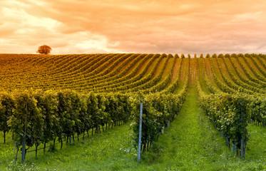 Viticulture © Arpad
