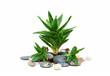 Aloe vera and stones