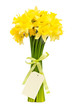 bouquet of beautiful daffodils isolated on white background