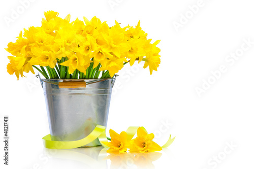 daffodils in metal bucket over white background
