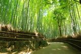 Fototapety 竹林の小道