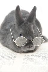 Kaninchen mit Brille und Buch