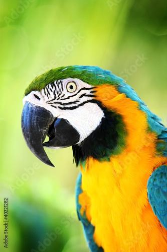 Fototapeten,papagei,tier,schnabel,vögel