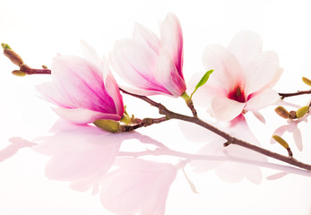 Pink spring flowers with reflection © exclusive-design