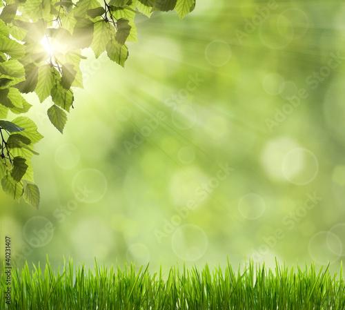 Piękna Natura Bokeh