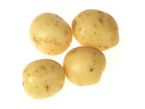 New Jersey Potatoes