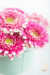 Closeup of pink gerbera flowers in a pot