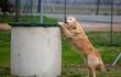 cane da soccorso