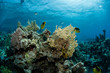 Leinwanddruck Bild Beautiful underwater scene of fishes swimming