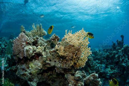 Leinwanddruck Bild - eothman : Beautiful underwater scene of fishes swimming