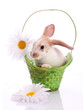 Funny rabbit in basket