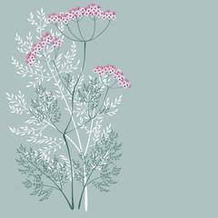 valerian, meadow plant