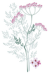 Valerian, meadow plant