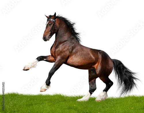 Bay projekt koń galopuje w dziedzinie