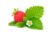 Strawberry with Flower and Leaves Isolated on White Background