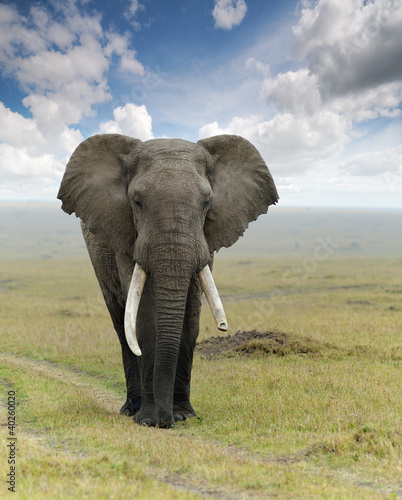 Fototapeten,afrikanisch,elefant,bull,mutter