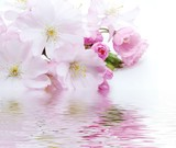 Fototapety pink flower