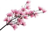 Fototapete Blühen - Blooming - Pflanze