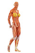 muscle woman stand up side view
