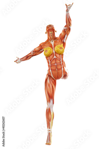 muscle woman ballet front view