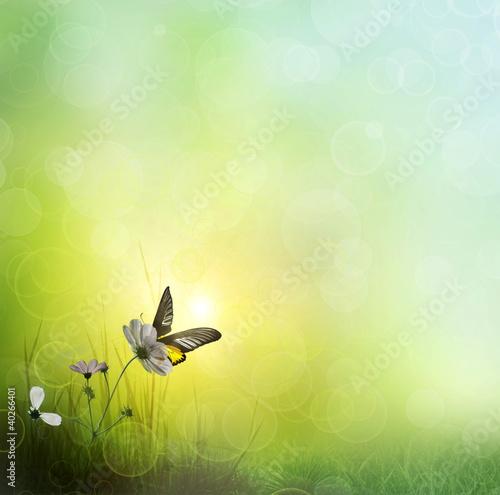 background of grass. Butterfly on a Flower