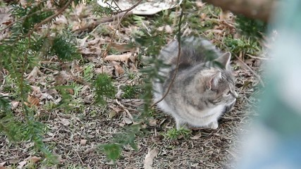 Feral Cat under tree