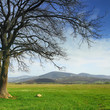 Tree on a green meadow and mountains on the background