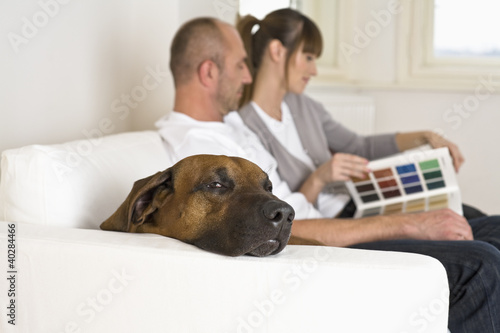 Couple sitting on sofa, looking at catalog, side view