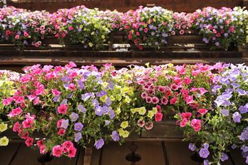 fioriture primaverili su balcone