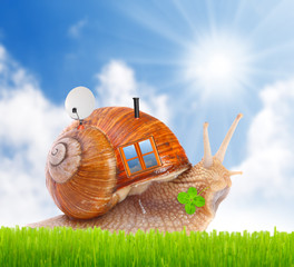 The snail with his mobil home on the road.
