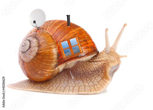 The snail with his mobil home on a white background..