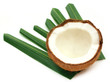 Fresh Coconut with green leaves over white background