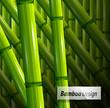 Fototapeten,natur,dekoration,frühling,bambus