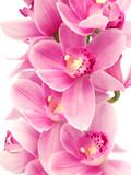 Fototapeta ofiara - łodyga - Kwiat