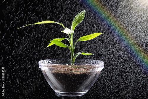 Junge Pflanze in Schale im Sprüh Regen mit Regenbogen