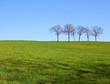 Les arbre et le champ vert