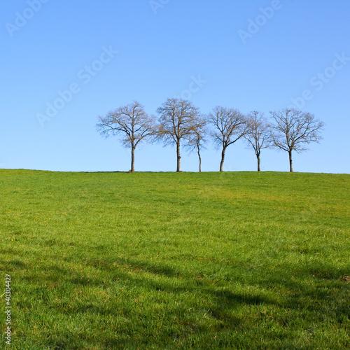 Les arbres au milieu du champ carré
