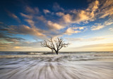 Charleston SC Ocean Oak Tree Edisto Island Beach South Carolina