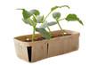 plants de concombre