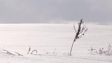 Snowfield and dried grass,in Biei,Hokkaido,Japan