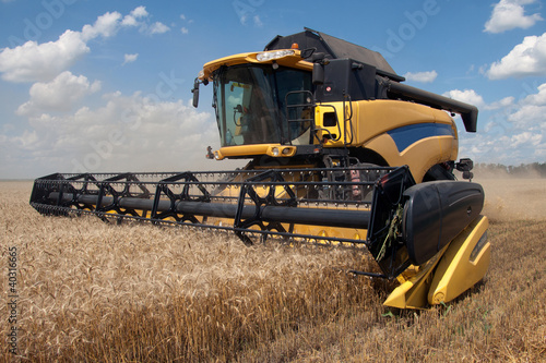 Combine harvests wheat on a field in sunny summer day - 40316665