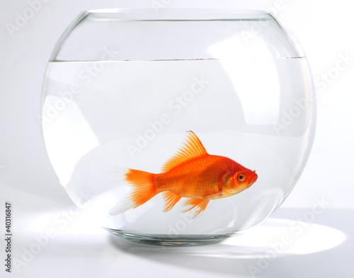 Poisson rouge dans un bocal photo libre de droits sur la for Tarif poisson rouge
