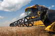 Combine harvests wheat on a field in sunny summer day - 40317482