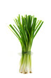 A bunch of fresh green Allium Spring Onion Flowers